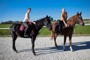 koně1